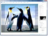 WindowsLive Общие сведения