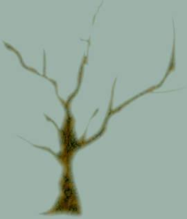 Прозрачное дерево - урок Corel DRAW