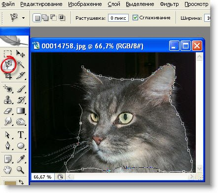 Сделать бесплатно на сайте фотомонтаж женщина кошка как сделать задний фон на сайте dle