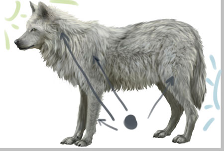 волка и затемнить хвост,